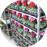 Veľkoobchod s kvetmi